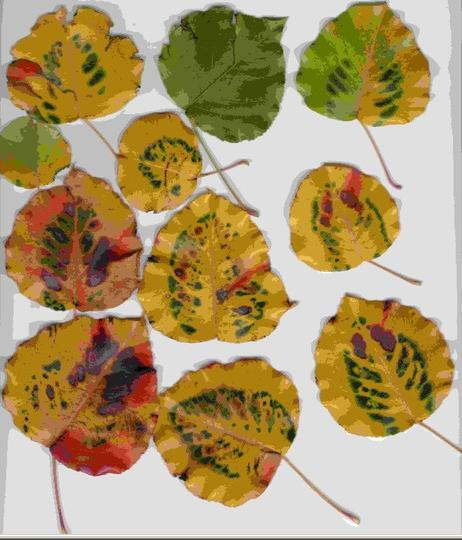 scans of leaves