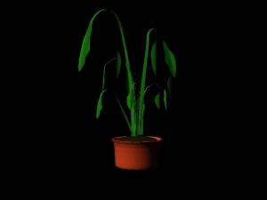 Plant Render